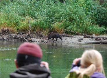 grizzly bear viewing and bear watching tours with Kynoch Adventures. Photographing bears